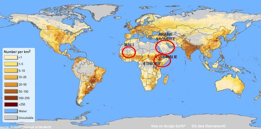 Carte densite bovine vache monde arabie saoudite somalie