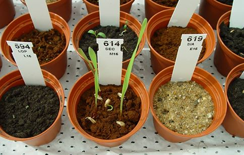mars one project plant pot
