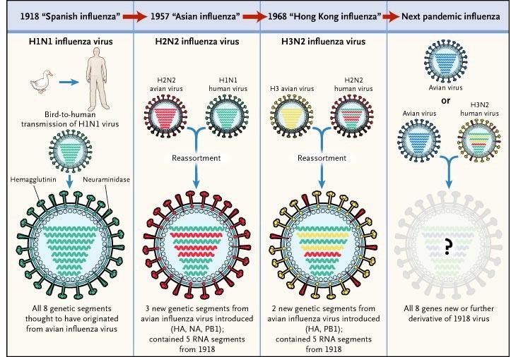 influenza virus grippe mutation pandémie épidémie