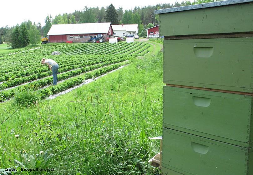 bicopoll project bee strawberries abeille fraises bio