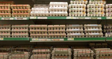 oeufs contaminés fipronil antiparasitaires pesticides fraude scandal