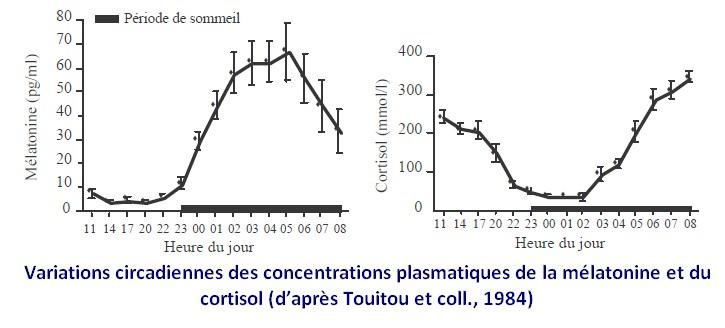 variations circadiennes mélatonine cortisol rythme biologique