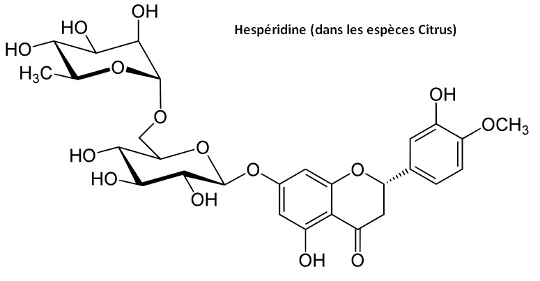 hespéridine antioxydant citrus agrume molécules