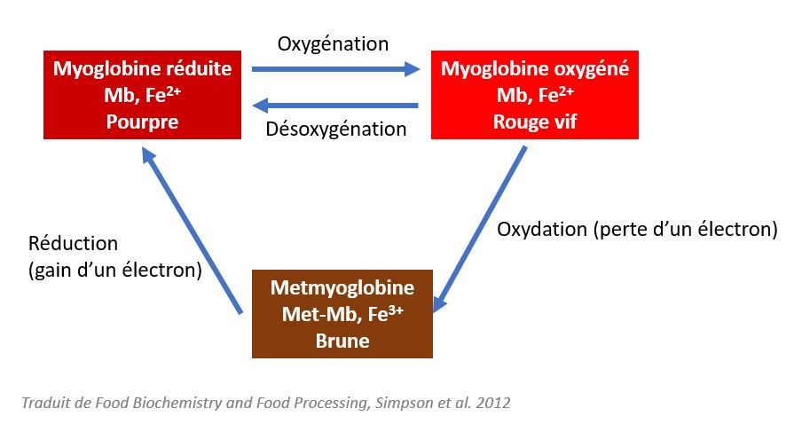 myoglobine hémoglobine couleur viande