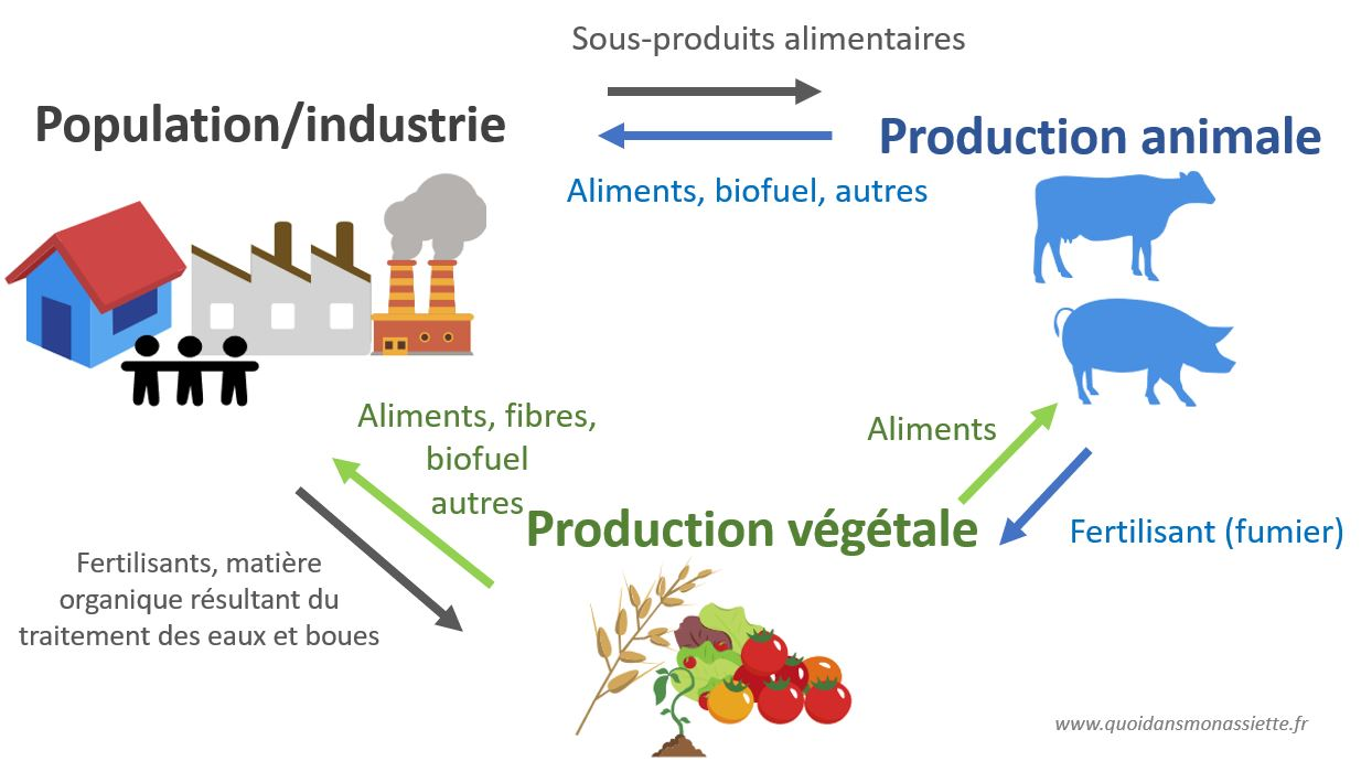 relations agricuture societe elevage production animale vegetale industrie
