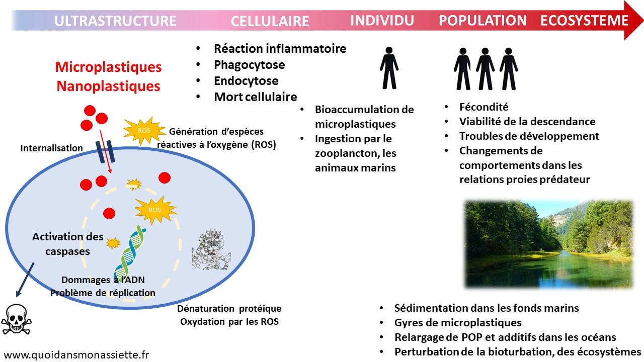 Microplastiques pollution environnement ecosysteme population