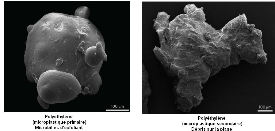 polyethylene microbilles microplastiques