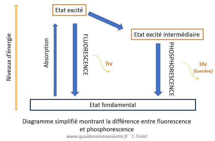 fluorescence phosphorescence bioluminescence schema différences