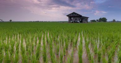 Une hausse du dioxyde de carbone CO2 atmosphérique pourrait réduire la valeur nutritionnelle de certaines cultures