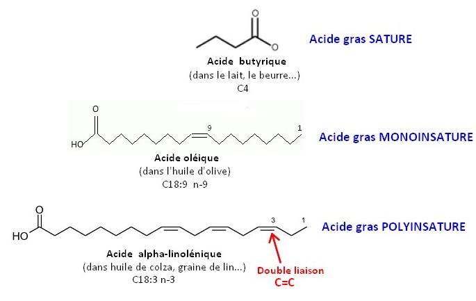 Insaturation et saturation des acides gras - Position de la double liaison Carbone-Carbone