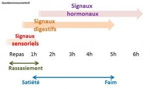 Regulation prise alimentaire sensoriel digestif hormonal