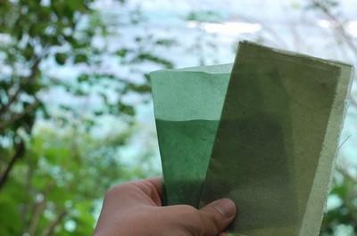 evoware plastique comestible emballage