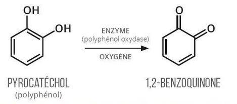 quinone brunissement enzymatique