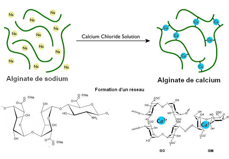 sephirification principe reseau gel alginate de calcium