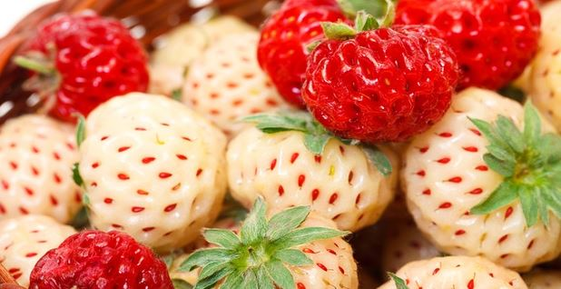 fruits hybrides fraises pineberry