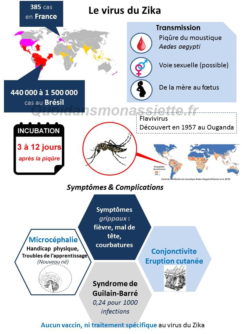 infographies virus Zika actualite informations preventions moyens epidemie infectieuses aedes moustique