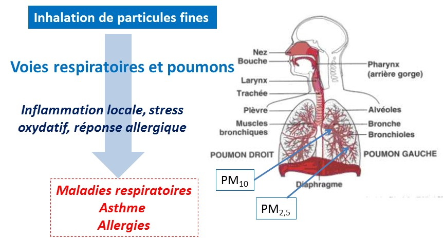 schema pollution air sante particules fines impacts respiratoires