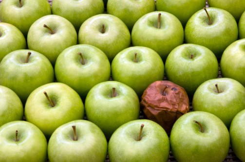 mycotoxines fruits moisissure moldy apple pomme pourri