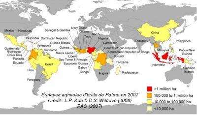 carte culture huile palme monde map