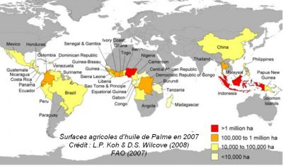 carte culture huile palme monde map