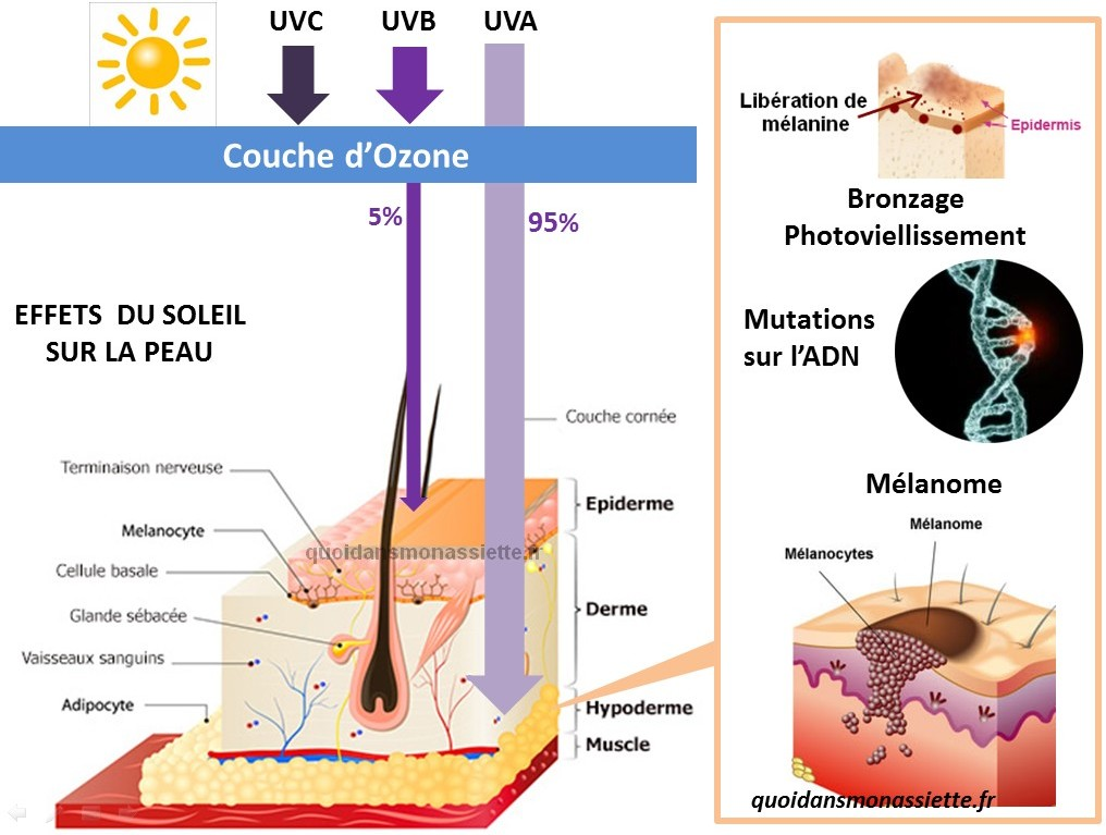 effets soleil peau UV Ultraviolet exposition mutations cancer