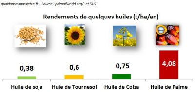 rendement huile palme production soja tournesol colza