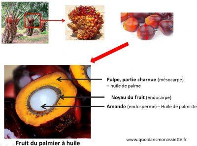 schema huile de palme fruit coupe