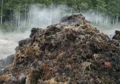compost champignon fumant paille crotin de cheval