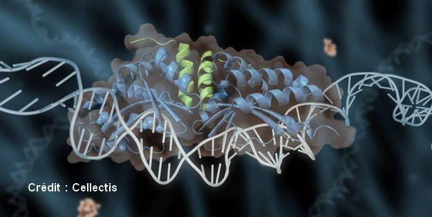 modificación genética del ADN de tijera de meganucleasa