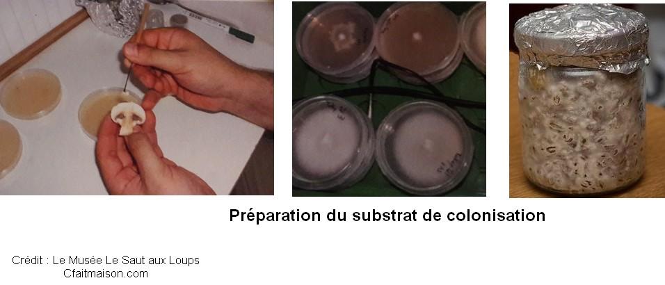 substrat colonisation preparation champignons