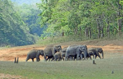 Kerala Periyar National Park