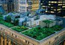 A la découverte des toitures végétalisées : écologique, efficace et innovant !