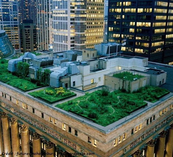 toit vert vegetalise jardin toiture agriculture urbaine