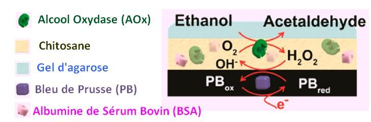 patch alcoolémie sueur alcool oxydase reaction chimique