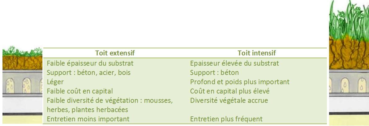 A La Decouverte Des Toitures Vegetalisees Ecologique Efficace Et