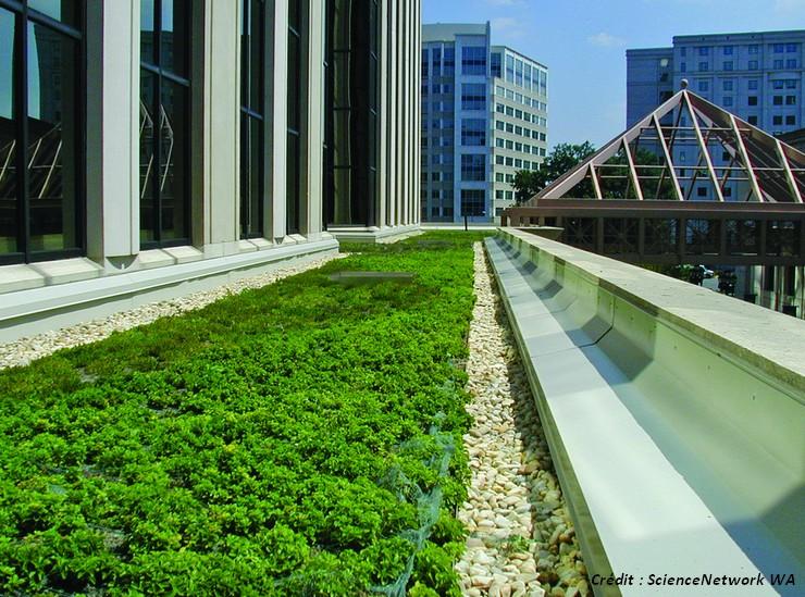 toit vegetalise green roof
