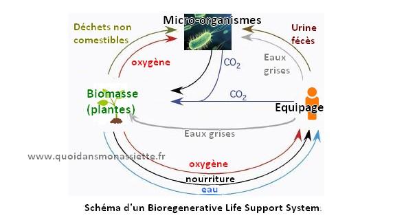 Schema bioregenerative Life support system ecosystème