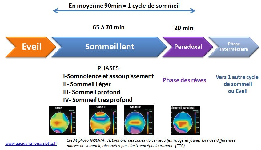 cycle sommeil dormir nuit phases