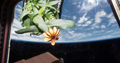 plant culture space agriculture