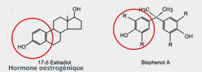 comparaison bisphenol A hormone oestrogene mime