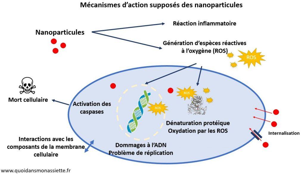 mecanisme action nanoparticules nanomatériaux cellule physiologie sante