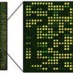 puce à adn micro-array dna
