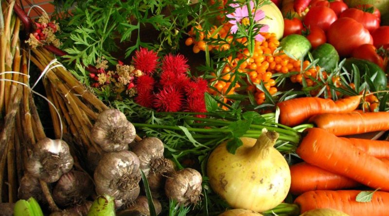 agriculture alimentation biologiques bio légumes fruits