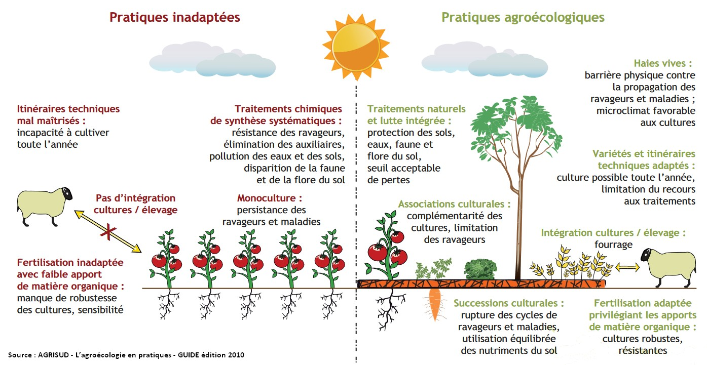 agroécologie pratique technique concepts