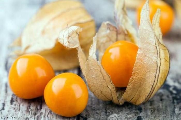 Novel Food : Que sont les Nouveaux Aliments et Ingrédients sur le Marché Européen ?