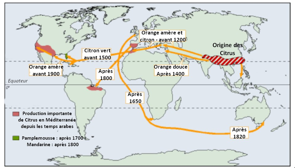 Carte origines agrumes oranges mandarines clementines monde production