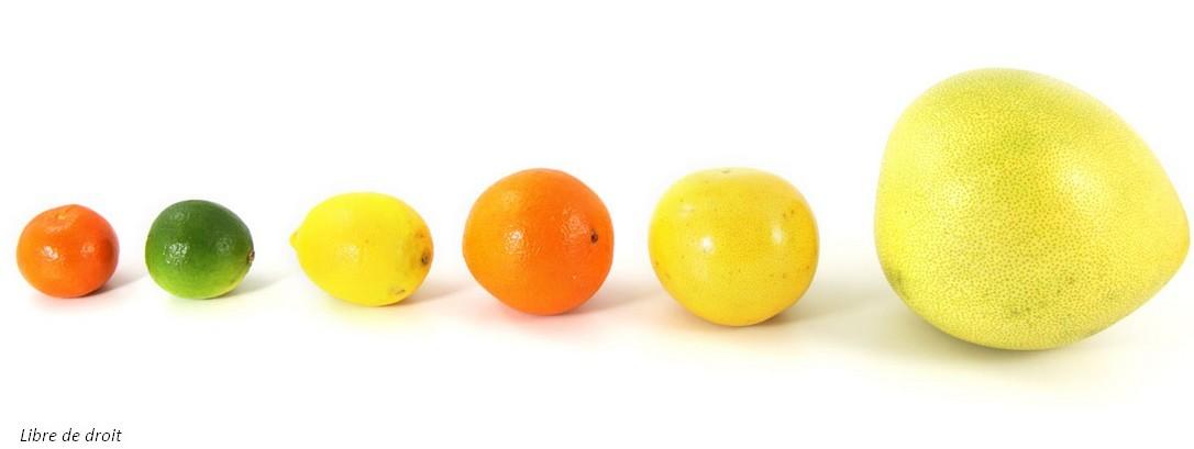 diff u00e9rences entre cl u00e9mentines  mandarines et oranges   les