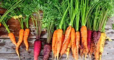 color food couleur aliment carottes origines