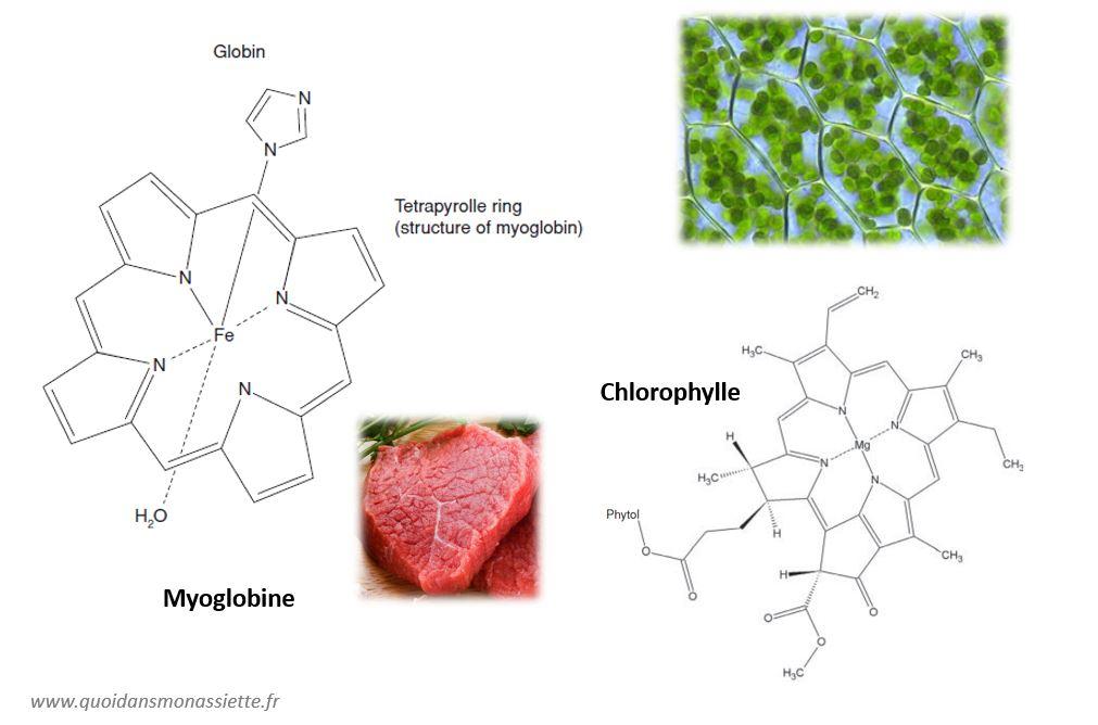 hémoglobine chlorophylle structure alimentation pigment végétaux