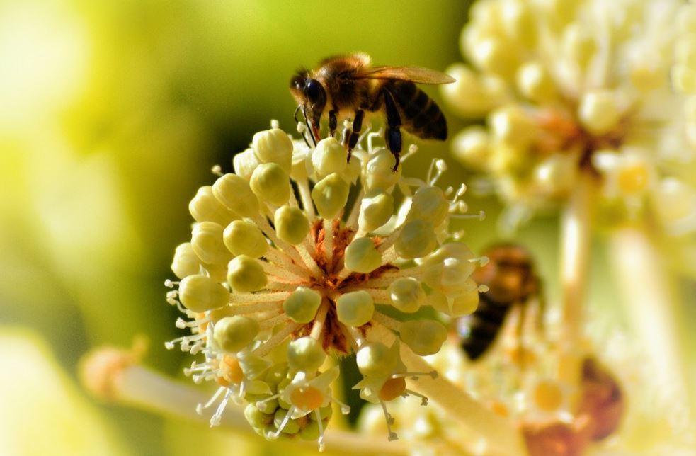 miel neonicotinoides abeilles pesticides